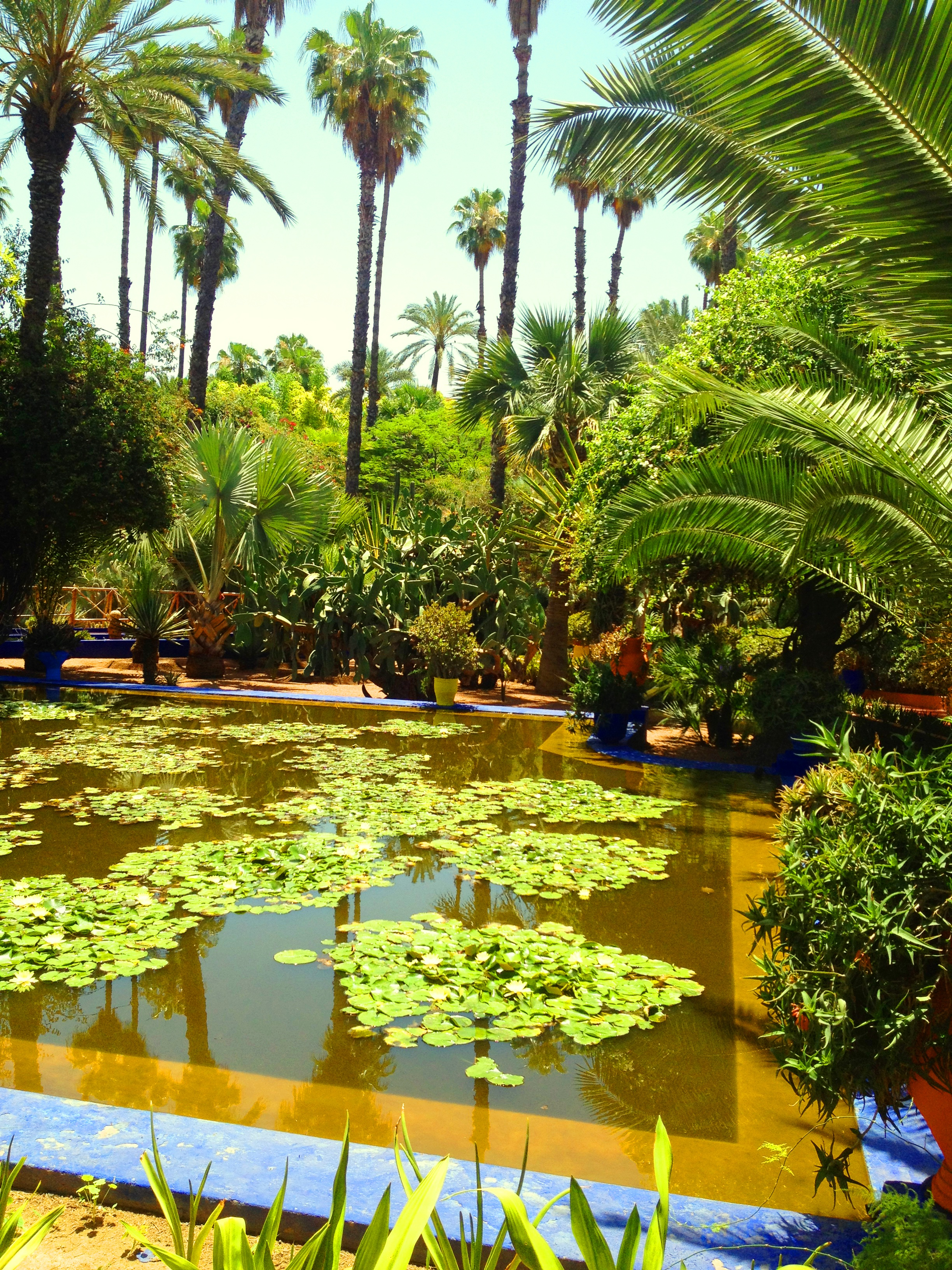 Inspired by ysl and le jardin majorelle ayesha amato for Jardin marrakech